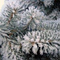 Снег :: Ирина Пыхачева