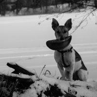 верный пёс :: Anrijs Slišāns