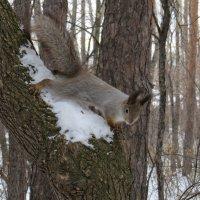 На дереве :: Александр Смирнов