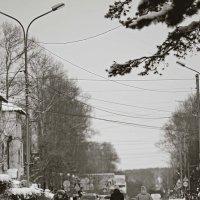 Мамы :: Сергей Щеглов