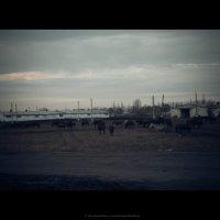 Табун в деревне :: Александра Карпушкина