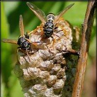 осиное гнездо :: victor leinonen