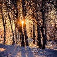 Along the winter sun :: Лия ***