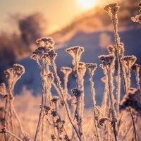 Зима :: Лия Чурина