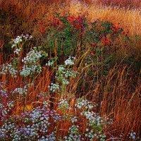 Цветы дико растущие . :: Александр Макурин