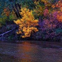 Осень золотая . :: Александр Макурин