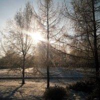 В лучах январского солнца :: Николай Дони