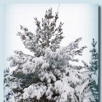 Зима в Узбекистане... :: Юрий Владимирович