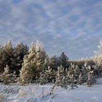 Зимний лес :: Вера Саитхужина