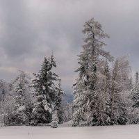 снежно :: ИриSка &