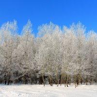 мороз и солнце :: Владимир Суязов