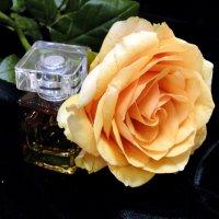 Аромат розы :: Елена Шемякина