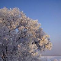 Зимнее цветение :: Наталия Григорьева