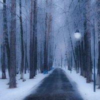Зимний парк :: Геннадий Хоркин