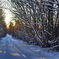 зимний путь :: Светлана