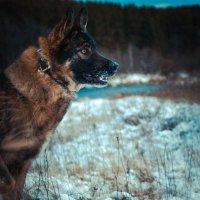 Моя волчара :: Александра Волкова