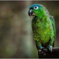 Карибский пацан...Эко парк Шкарет.Мексика. :: Александр Вивчарик