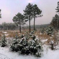 Зима... :: Владимир Клюев