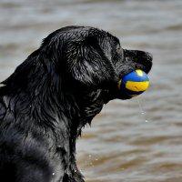 Это всего лишь мячик...)) :: VADIM *****