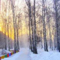 Утром солнышко встаёт. :: Мила Бовкун