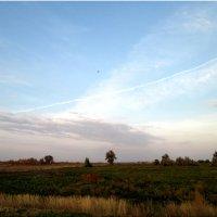 Природа в сентябре... :: Тамара (st.tamara)