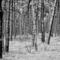первый снег :: Руслан Маркс