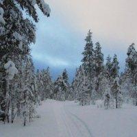 Зима..лес..сумерки.. :: Галина Полина