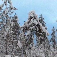 Зима..  лес..  сумерки :: Галина Полина