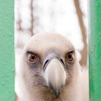 Детский парк, Симферополь, Россия :: Денис Кулик