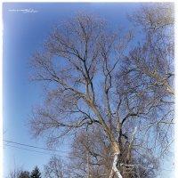 Январь. Зима. 2015 (2) :: DimCo ©