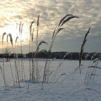 Зимние прогулки :: Павлова Татьяна Павлова