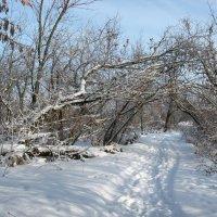 Прогулка по зиме :: Natali
