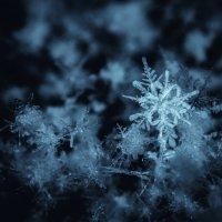 снежинка :: Аркадий Алямовский
