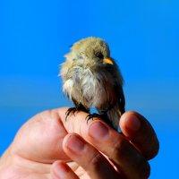 Спасенный птенец :: Андрей Соловьёв