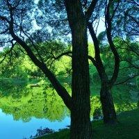 Утром на весеннем пруду :: Светлана Лысенко