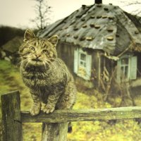 Выставка Воронежских фотохудожников :: Наташа Шамаева