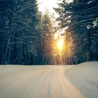 Дорога к солнцу :: Алёна Куценко