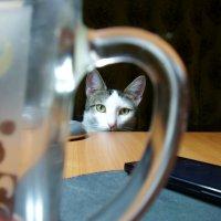 мой кот Филипп :: mexicanez Orloff
