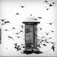 Зима в городе! :: Владимир Шошин