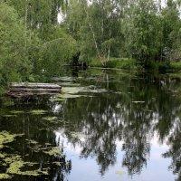 Нежность июня :: Татьяна Ломтева