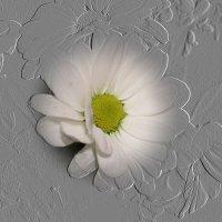 цветок :: Татьяна Осипова(Deni2048)