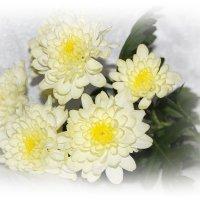 Хризантемы в январе... :: Tatiana Markova