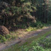 Утро в лесу :: Валентин Котляров