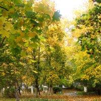 Золотая осень в парке :: Елена Семигина