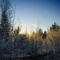 Морозное утро ноября. :: Алексей Caveman