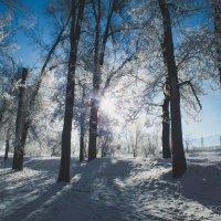 Сквозь ветви солнца луч пробился, своим сияньем ослепив :: Маргарита Б.