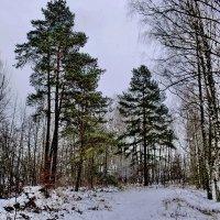 Зимняя  мгла. :: Валера39 Василевский.