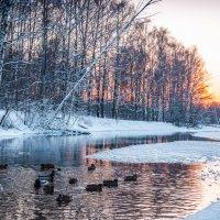 Подмосковные пейзажи :: Елена Решетникова