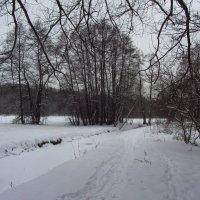 IMG_1137 - Московская зима как она есть :: Андрей Лукьянов