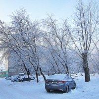 На деревьях иней серебрится,   Всё одела в белое зима. :: Мила Бовкун